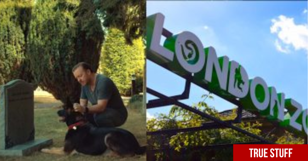 London Zoo comically respond to Ricky Gervais' offer of his body